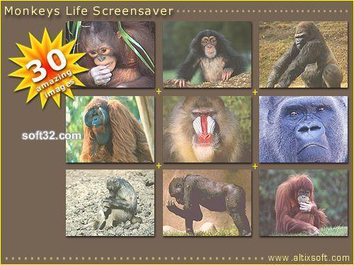 Monkeys Life Screensaver Screenshot 3