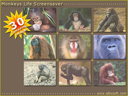 Monkeys Life Screensaver Screenshot