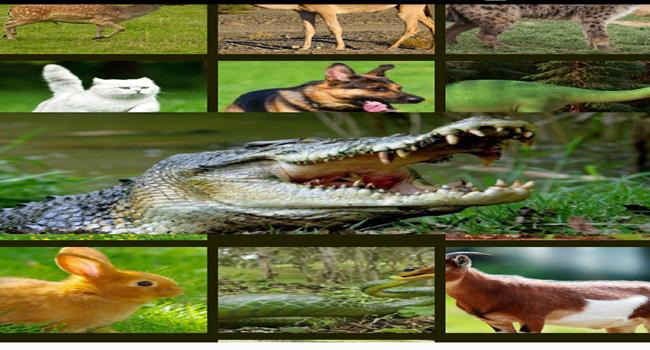 Animal Sounds,Wallpapers HD Screenshot 2