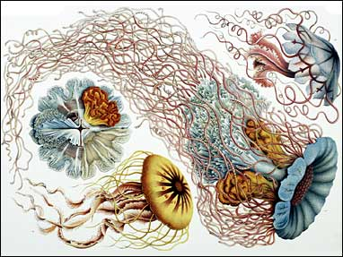 Art Forms in Nature by Ernst Haeckel Screenshot