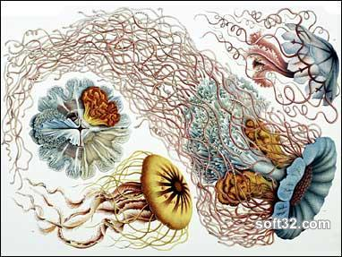 Art Forms in Nature by Ernst Haeckel Screenshot 2